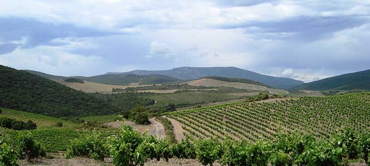Mont Tauch Les Garrigues Vineyards