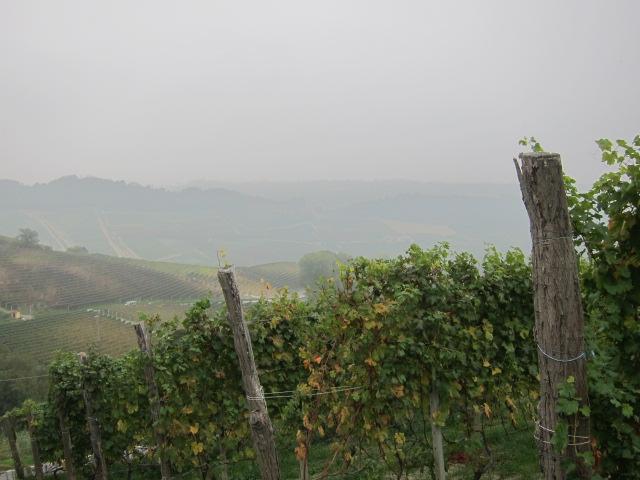 Silvano Bolmida Grapes