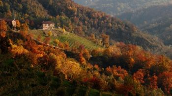 autumn colours, prosecco vineyard near valdobbiadene