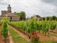chateau bonnet and vines in spring