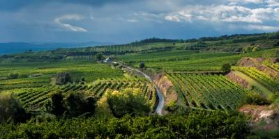domaine ott vineyards in wagram, austria
