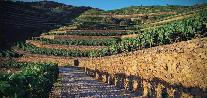 dows port vineyard