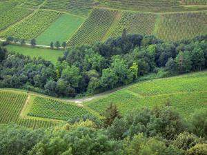 patchwork view of Jura vineyards from above