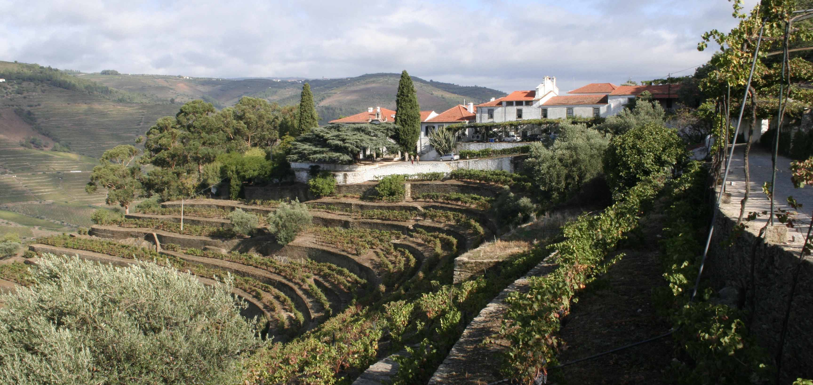 quinta do noval vineyard