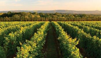 nyetimber vineyard in sussex, england