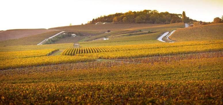pol roger champagne vineyard