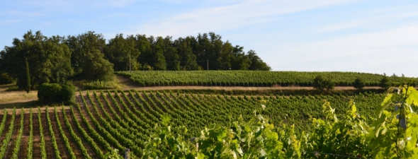 Chateau Puy Castera Vineyards