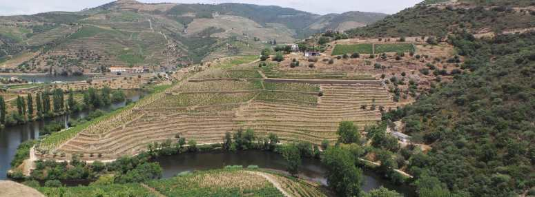 vineyard terraces of quinta de napoles