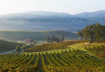 view of tablas creek vineyard, california