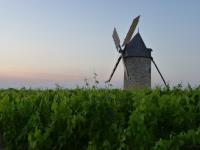 ch. tour haut caussan vines and windmill