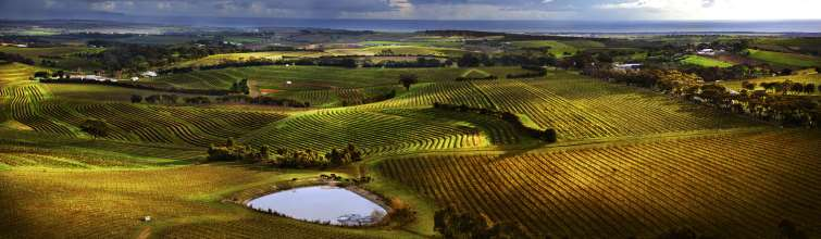 panoramic view of mclaren vale