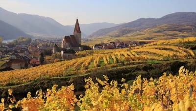 autumn vineyard scene in wachau, lower austria
