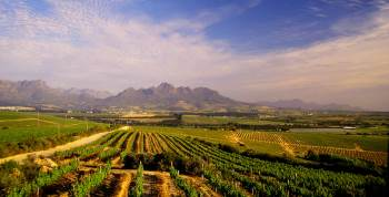 view of vineyard in coastal region, South Africa, with mountains in the background