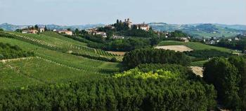 vineyard in the rolling hills of piedmont