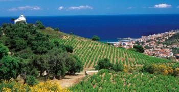 vineyard near the mediterranean sea in the banyuls appellation