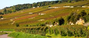 vineyard slope in burgundy