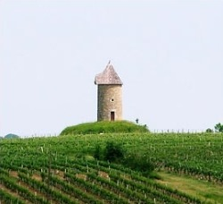 vines and tower chateau martet